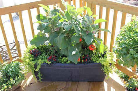 Gardening Club Ideas Container Gardens 8 Fantastic Ideas Garden Club