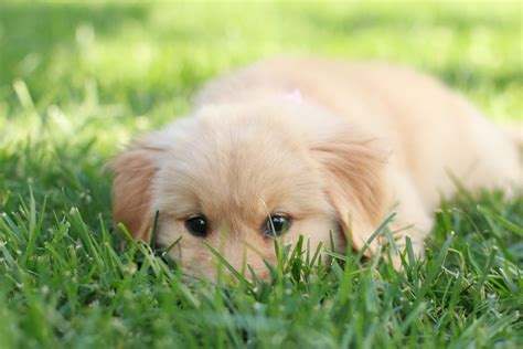 my new puppy meet sweetie my new puppy vlog sazan