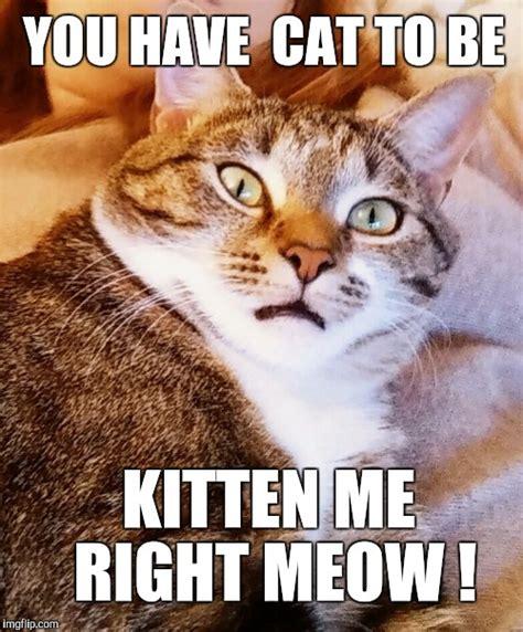 Cat Meme Maker - cat acting surprised imgflip