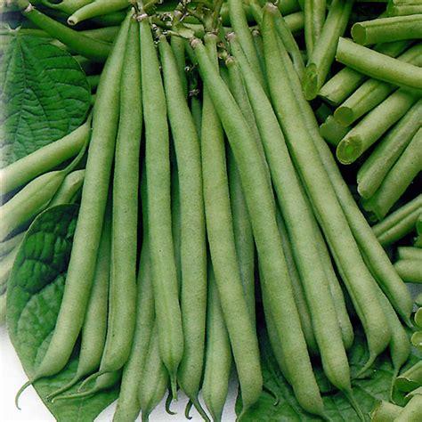 tendergreen green bean rocket gardens