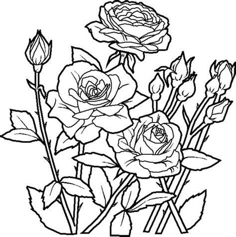 free coloring pages roses printable coloring pages flowers coloring town