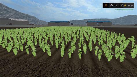 Marijuana Ls cannabis crop mod farming simulator 2017 17 ls mod