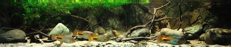 biotope aquascape 2012 aga aquascaping contest 32