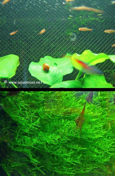 how to aquascape a freshwater aquarium 17 best ideas about freshwater aquarium plants on