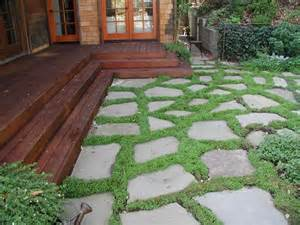 dry laid bluestone patio with groundcover traditional