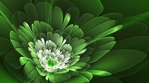 wallpaper green flower green flower hd wallpaper hd latest wallpapers