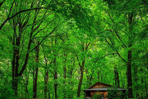 mn landscape arboretum berrens cabin mn landscape arboretum photograph by