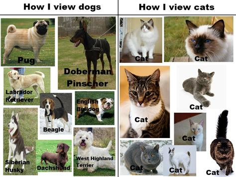 kittens vs puppies the real view on dogs and cats breed and top pics