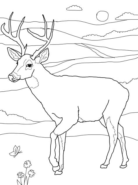 coloring book deer deer printable coloring pages