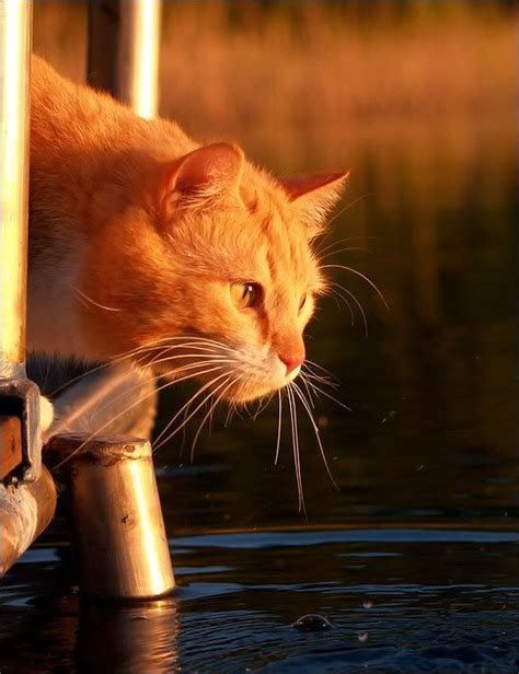 webshots cats 1665 best kitties at the beach or by the water images on