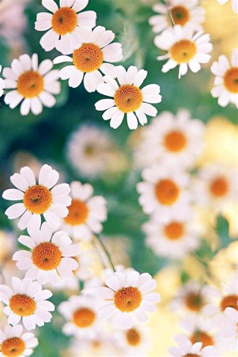 imagenes flores tumblr wallpaper flores tumblr