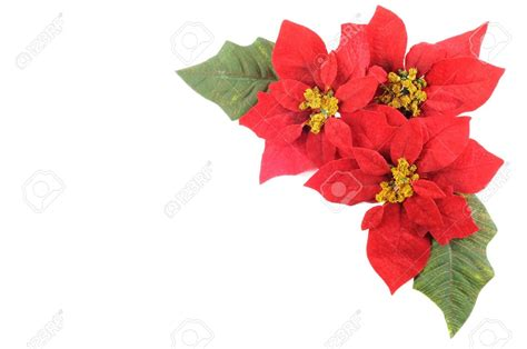 Popular Grocery Stores poinsettia corner borders happy holidays