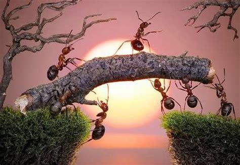 formiche in casa cosa fare formiche fastidiose ecco alcuni rimedi naturali
