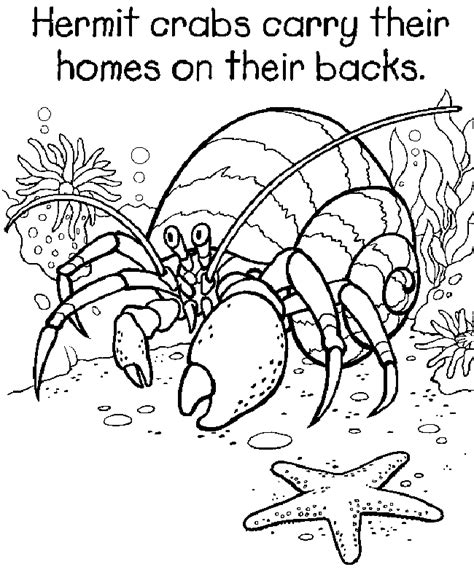 Hermit Crab Coloring Page 2nd Grade Art Projects Pinterest Hermit Crab Coloring Pages