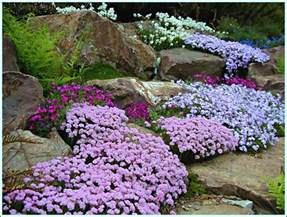 Flowers For Rock Gardens Rock Garden Photo Stoy Garden