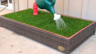 Dog Grass For Patio by Porch Potty Is Amazing First Automated Dog Litter Box