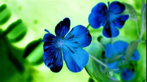 wallpaper of blue flowers blue flowers hd wallpaper 1080p hd wallpapers images
