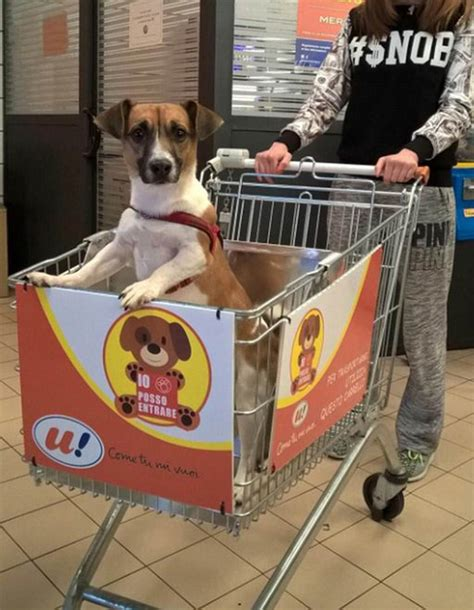 puppy shopping grocery store creates specially made shopping carts for dogs this s