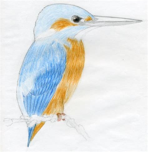 Drawing 7th Standard by How To Draw A Bird And What You Need To
