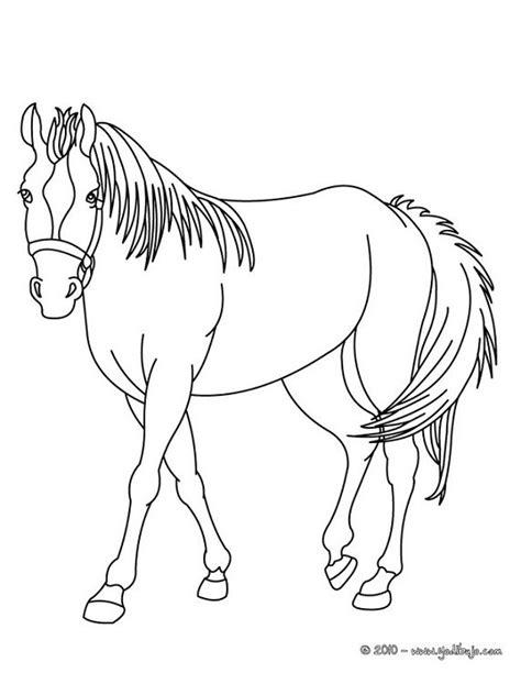 imagenes para dibujar reales imagenes de caballos para colorear y dibujar