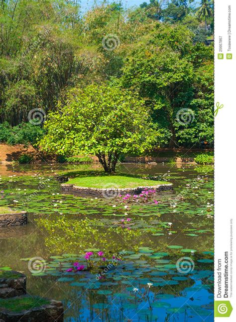 Arboretum Landscape And Design In Garden Royalty Free Stock Photography