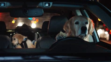 subaru golden retriever commercials subaru archives national purebred day 174