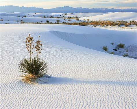 snow in desert desert in snow 1280 x 1024 nature photography