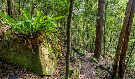 great north walk sections great north walk palm grove nature reserve nsw national