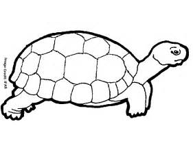 turtle coloring page free printable animal quot turtle quot coloring pages