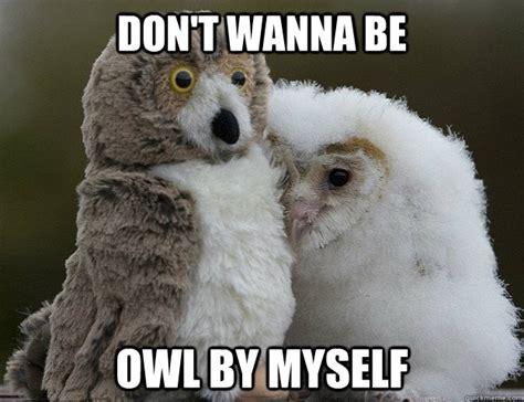 Who Owl Meme - owl by myself memes quickmeme