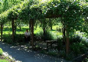Vine Covered Pergola by Covered Pergola Grape Vines And Pergolas On Pinterest