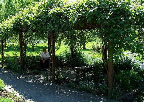 grape vine covered pergola yard crashers pinterest