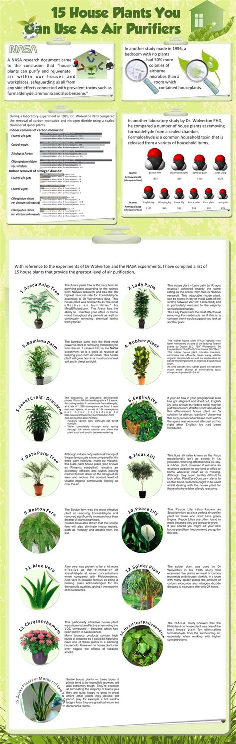 nasa plants air quality page 3 pics about space 15 air purifying house plants variegated spider plant