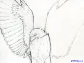 how to draw a hawk how to draw a realistic hawk harris hawk step 7