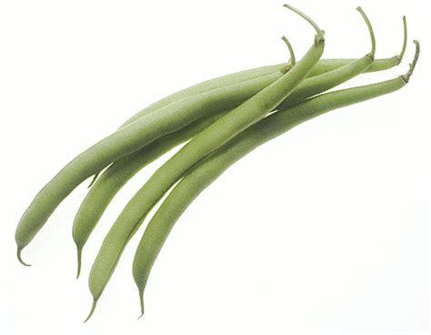 String Bean Clip - string bean cliparts free clip free clip