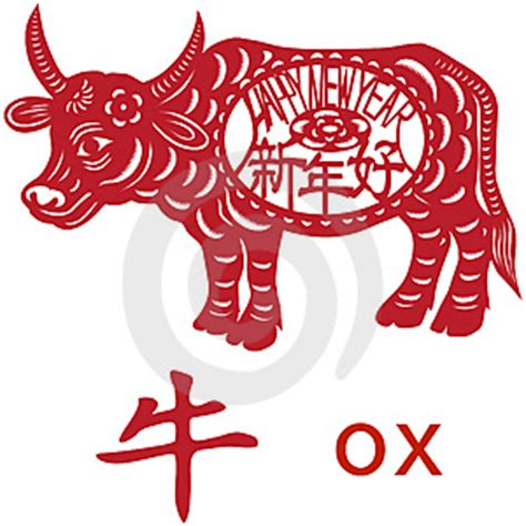 new year ox year what s going on sunday new year of the ox