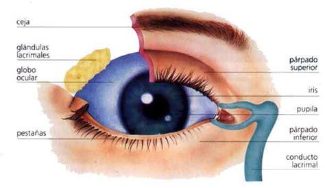 imagenes ojos humanos la vista