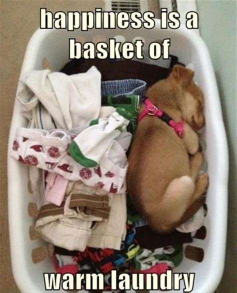 Crazy Dog Lady Meme - the coziest funny memes pinterest cozy crazy cat