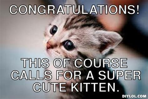Congratulations Meme - the gallery for gt congratulations cat meme