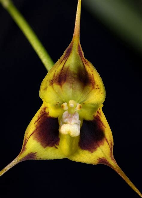 100 facts about orchids 6 incredible flowers that 332 best orchid mimicry images on pinterest rare flowers