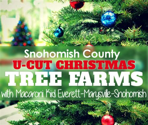 u cut christmas tree farms around snohomish county