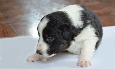 when to deworm a puppy vet clinics in idaho valley veterinary clinic