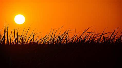 grass silhouette sunset orange sky wallpaper 1366x768