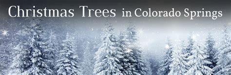 christmas tree farm in colorado springs co