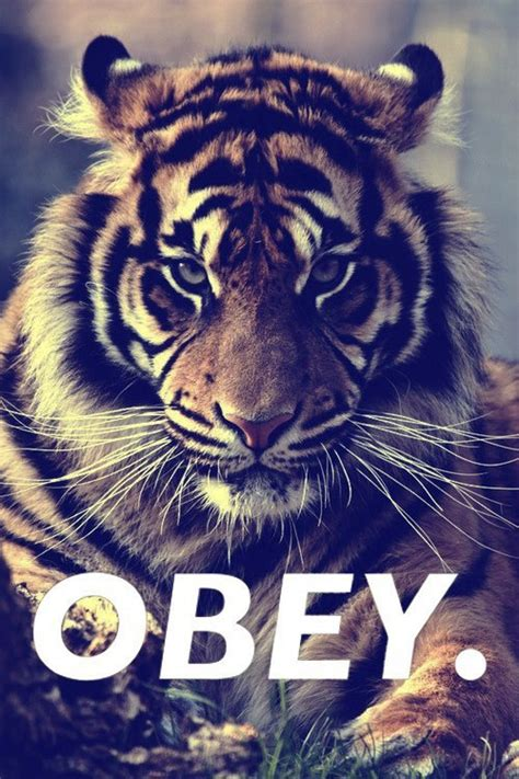 wallpaper tumblr tiger tiger swaggg tumblr