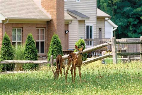 Keeping Deer Out Of Garden by Electric Fences Help Keep Deer Out Of Garden
