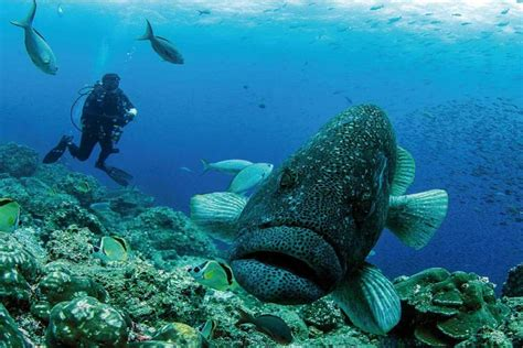 dive galapagos galapagos scuba diving 4 hotel 6 days