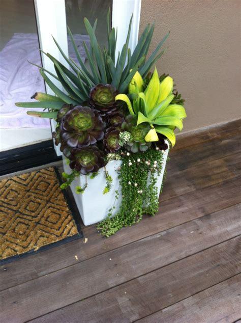 Cute Succulent Pots Cute Succulent Pot Great Pots Plantings Pinterest