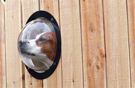 backyard pet dog friendly backyards healthy paws