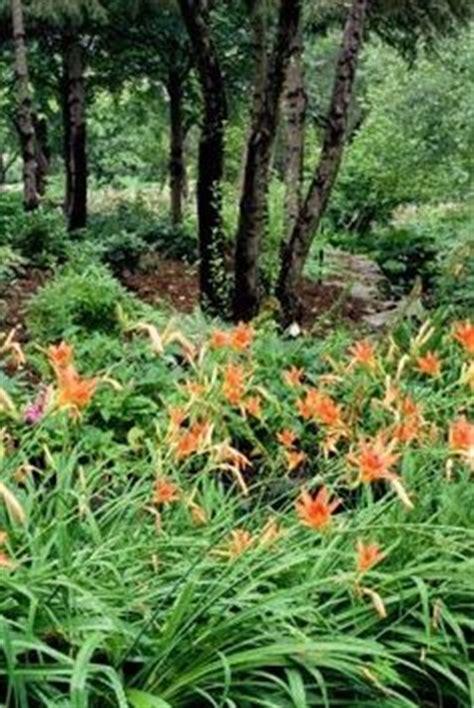 sala bergenstj 228 rna v 228 g betula pendula laciniata flikbladig bj 246 rk pinterest